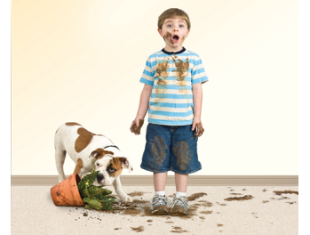 Dog-boy-and-dirt-on-carpet