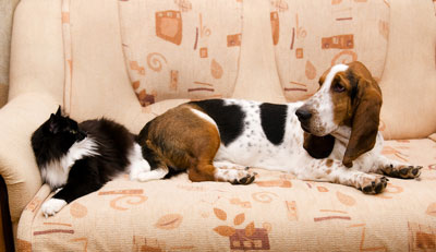 Sofa-With-Animals-On-It